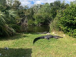 An amazing glimpse of the Everglades!