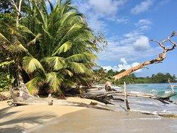 Een echte Caribische ervaring
