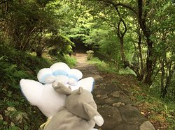 森の中で探検