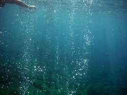 champagne reef les bulles translucides