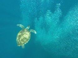 Tortue qui joue avec les bulles des plongeurs