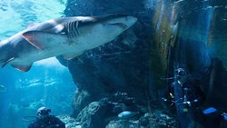 Dive with shark!