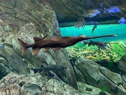 l'aquarium est magique !!!!
