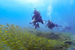 customers swimming above a school of fish
