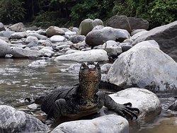 Bukit Lawang Gateway - Jungle Trekking Activities