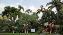 palm trees / animal structures