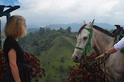 Con Cocora Trek puedes tener una sinergia entre el caballo y tú. Solo en Salento Colombia.