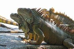 Arch's Iguana & Marine Park