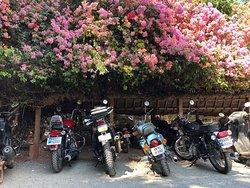 Oase vor den Toren von Pondicherry