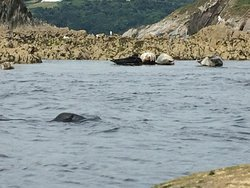 Seals ahoy, a few of the locals chilling out at low tide.
