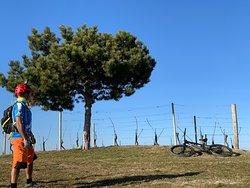 Punti panoramici tipici delle Langhe da scoprire in MTB con una guida locale