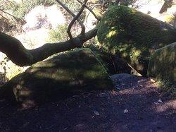 Rochers arbres et roches