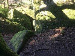 Soleil entre les rochers verts