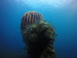 Bali Luxury Divers BLD