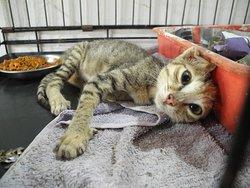 Animal Shelter Agonda