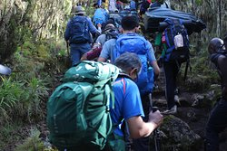 Join  hike Charity Kilimanjaro Climb for Cancer October 22 2019 with Kilimanjaro Brothers
