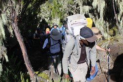 Join Charity trekking Kilimanjaro Climb for Cancer October 22 2019 with Kilimanjaro Brothers
