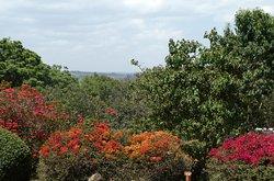 De fantastiske farvestrålende blomster ud den fænomenale udsigt