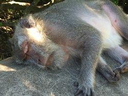 hard day monkey