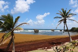 Bathsheba Beach 5