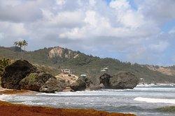 Bathsheba Beach 10