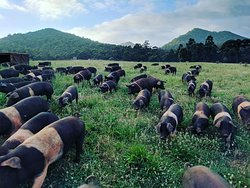 Life of pigs farm tours.