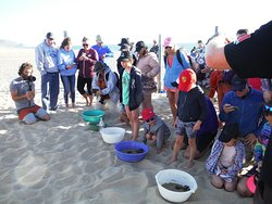 People gathering before sunset to see the newborn turtles and await their release.