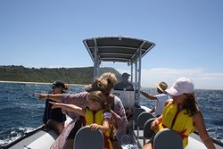 Dolphin Watching on an Ocean Blast Cruise at Terrigal