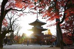 Shinnyodo pagoda at dusk in Higashiyama