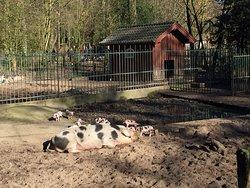 Bürgerpark, Tiergehege, большой красивый парк есть вольеры с животными