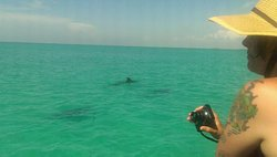 Always on the look out for dolphin!