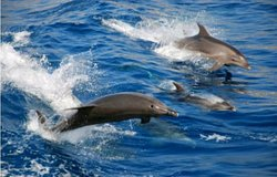 Yes, we have dolphins! The Algarve coast is a great location to see them. We work closely with our partners and friends to share with each other dolphin sightings, increasing your possibilities of seeing these magnificent creatures up close.