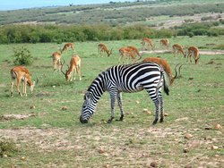 Wildlife in Samburu National Reserve