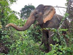 Pattaya Elephant Sanctuary