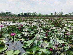 Red Lotus Floating Market