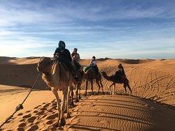 camel trekking through the sahara