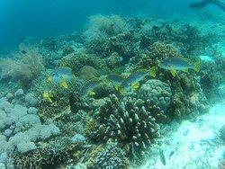 Coral Sea Dive Center