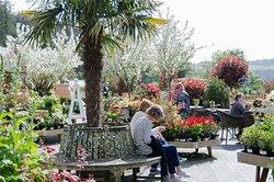 Duchy of Cornwall Nursery & Cafe