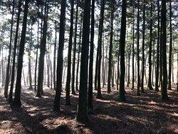 济州寺水自然休养林