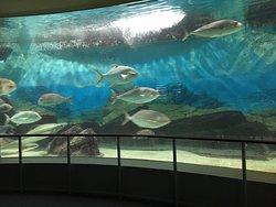 小さな駅近の水族館