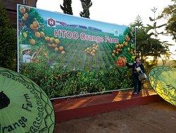 HTOO Orange Farm