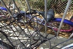 Kailua Bicycle