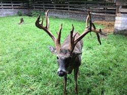 Double Diamond Deer Ranch