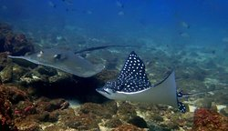 Sirenas Diving Costa Rica