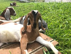 Great time with the baby goats!