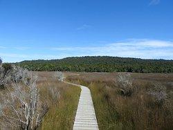 Katikati Bird Walk - Uretara Estuary & Yeoman Walkway