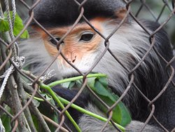 Endangered Primate Rescue Centre
