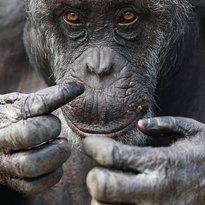 Wales Ape and Monkey Sanctuary