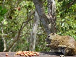 Timpohon Gate & Squirrel