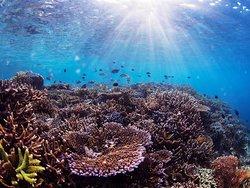 Mambo Dive Resort